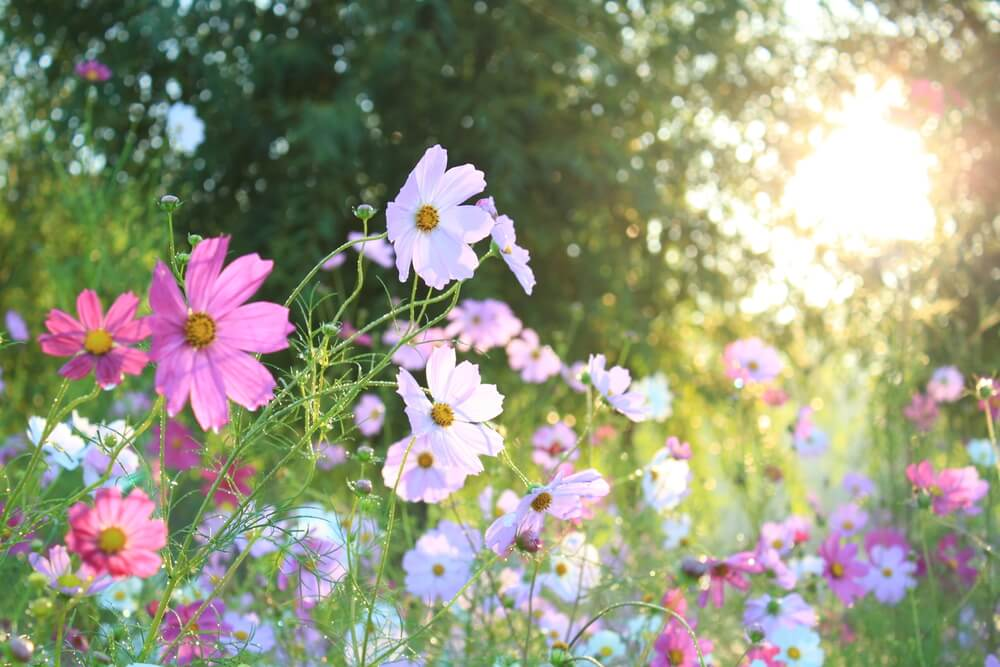 Spring Equinox Celebrations