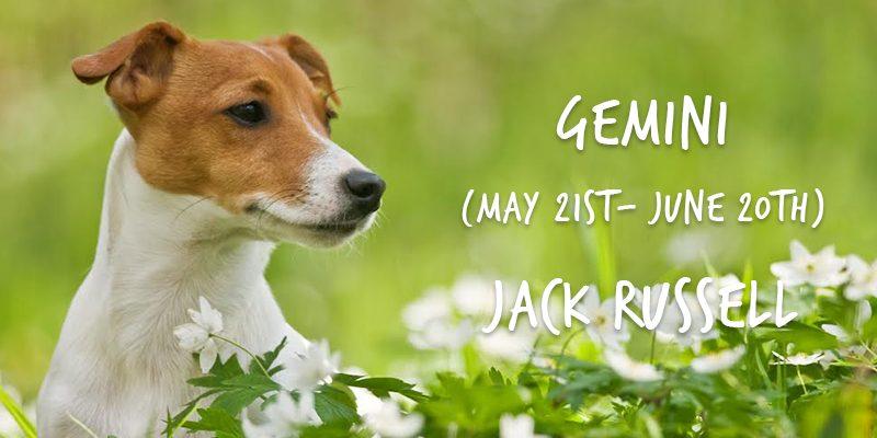 gemini jack