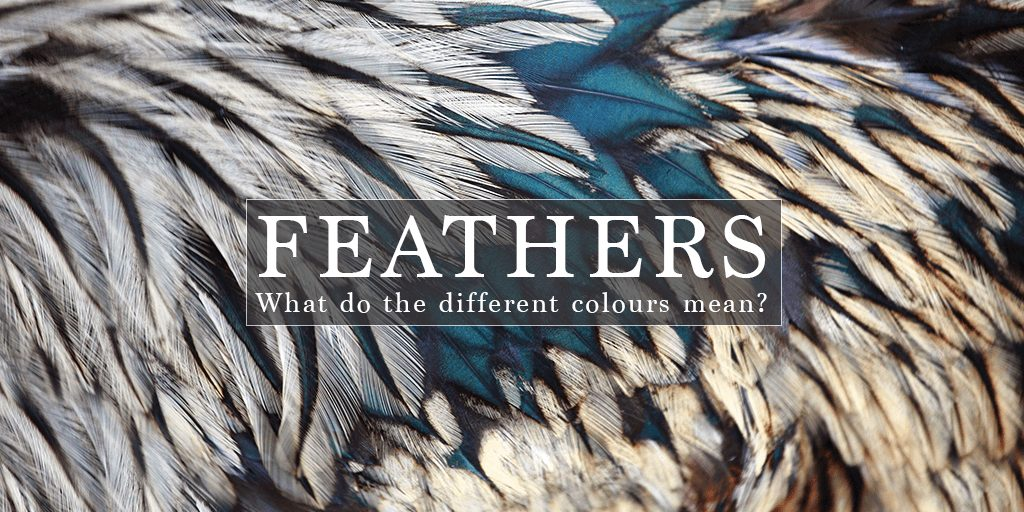 Feathers Appear When Angels Are Near What Is The Meaning Of Finding