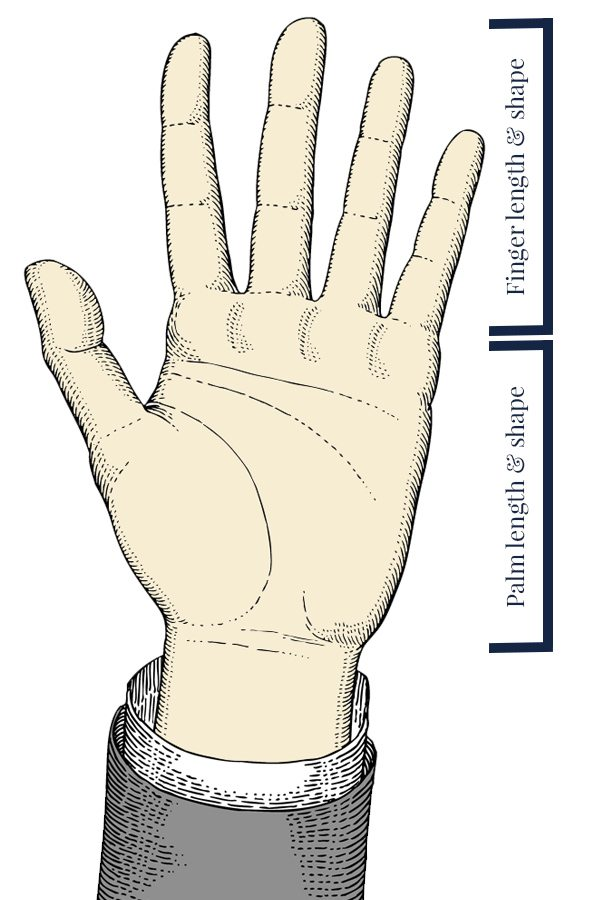 finger length and shape