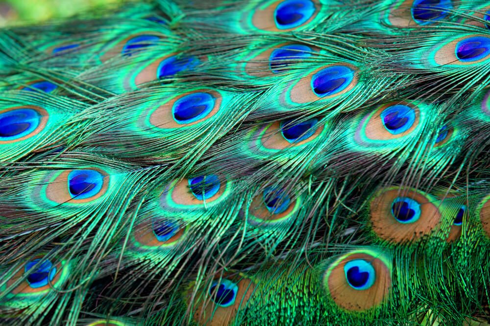 Bird Totems: What Are They And What Do They Mean For You?