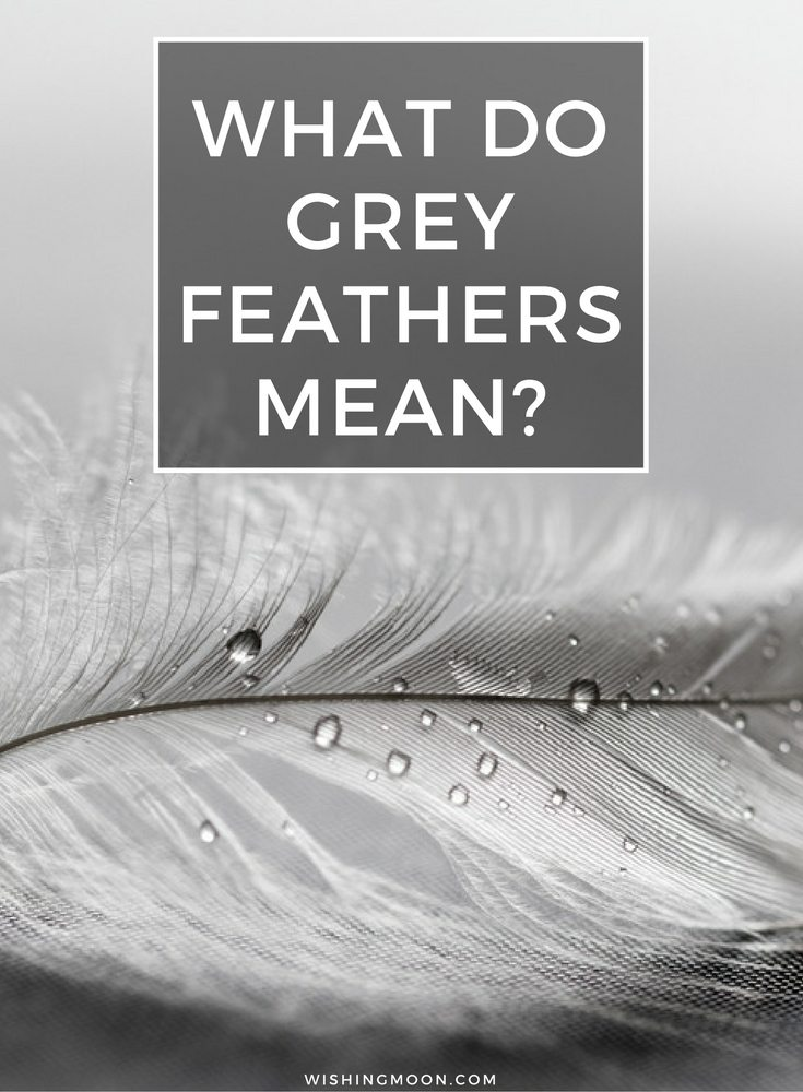 What Do Grey Feathers Mean Wishing Moon