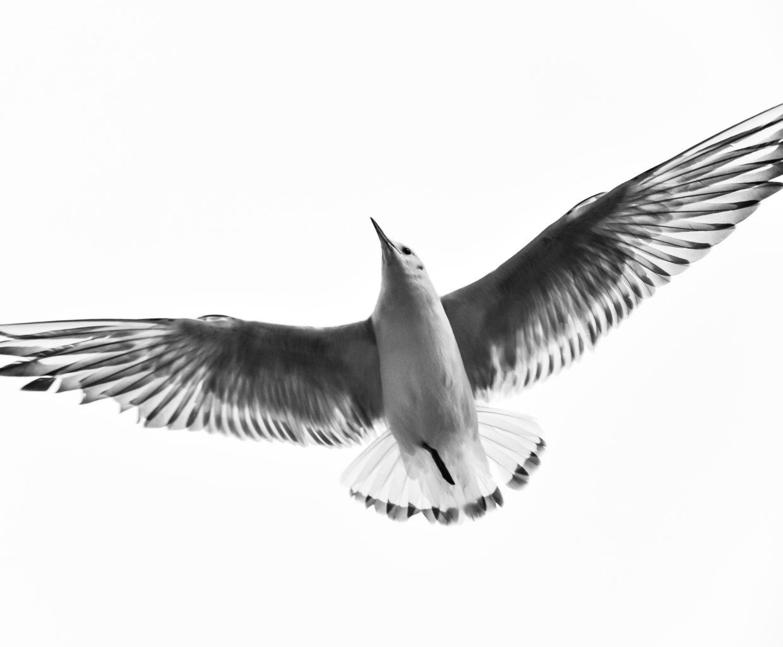 bird spirit animal