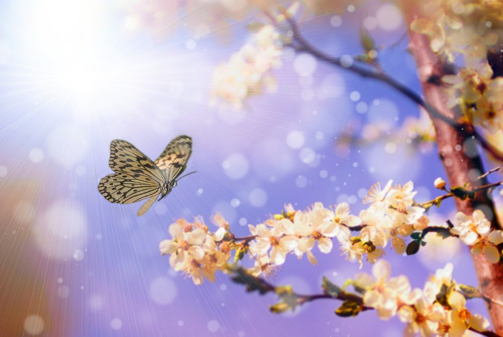 Butterfly Messages & Their Spiritual Meaning