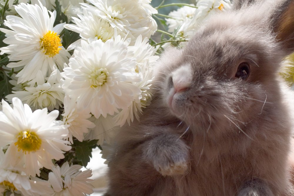 Why is a Rabbit's Foot Considered Lucky?