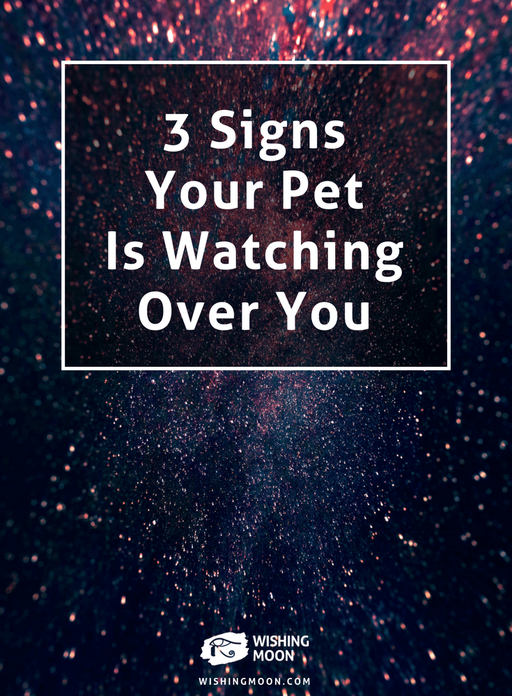 3 Signs Your Pet Is Watching Over You