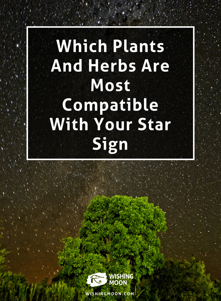 Which Plants And Herbs Are Most Compatible With Your Star Sign